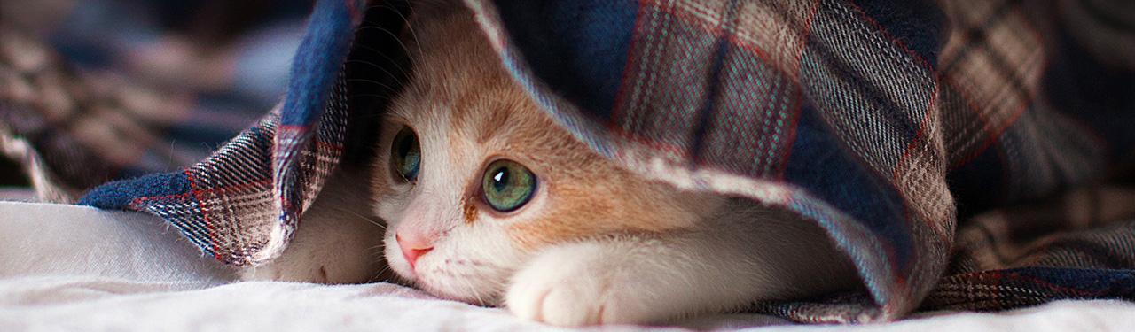 cute sleepy kitten website header